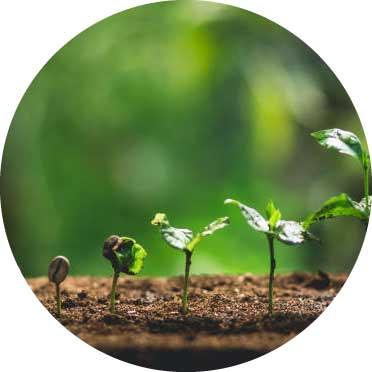 Nachhaltiger Bio Kaffee in den Wachstumsstadien